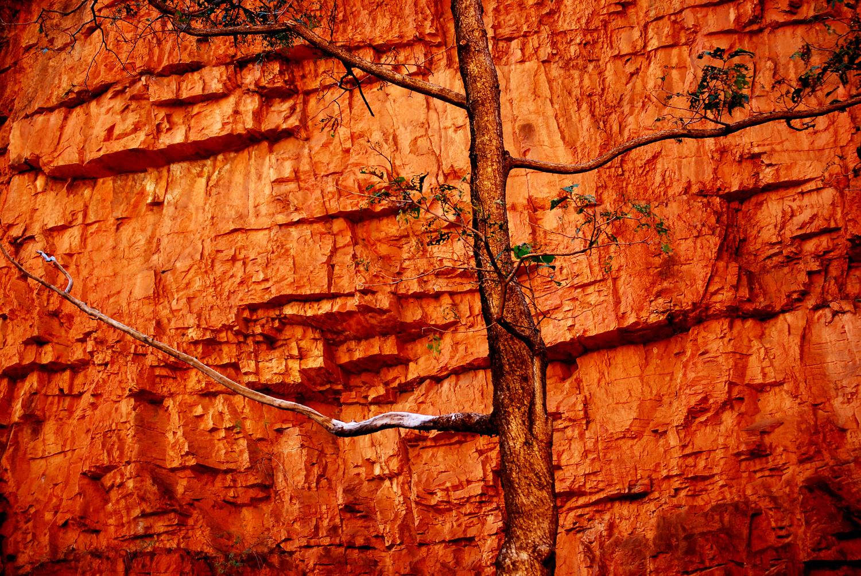 Kupferbaum in der EmmaGorge