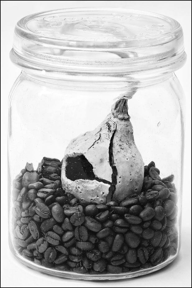 Kurbis und Kaffee