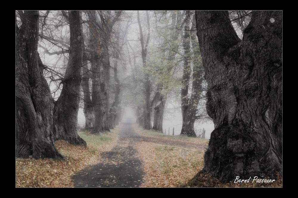 Kurfürstenallee im Nebel_01