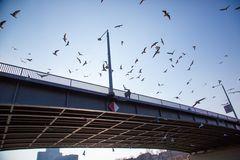 Kurpfalzbrücke (Neckar) Mannheim