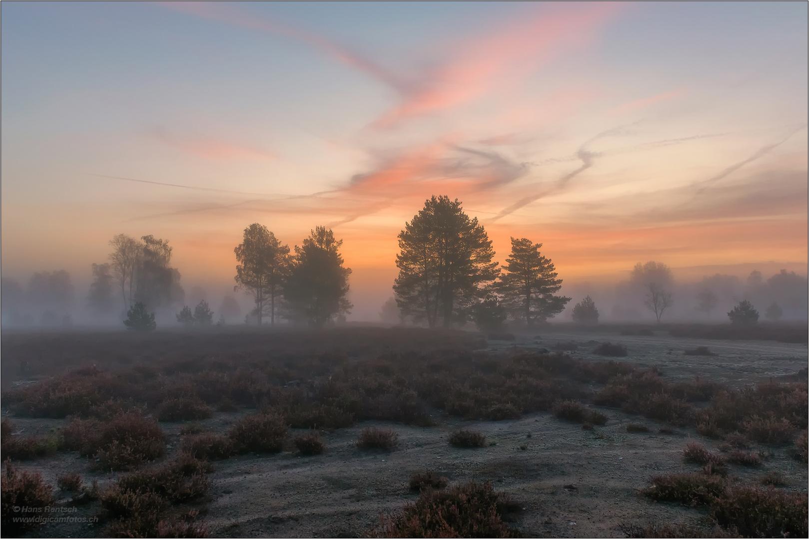 Kurz vor Sonnenaufgang in der Heide..