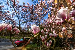 Kurzer Blütenzauber
