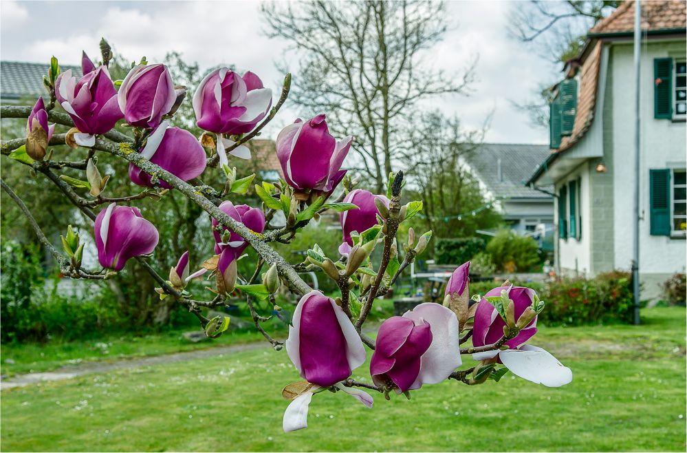 Kurzer Frühling