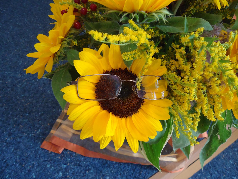 Kurzsichtige Sonnenblume