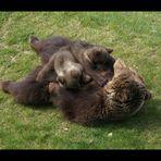 Kuschel - Bären