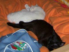 kuschel und zusammen einschlafen