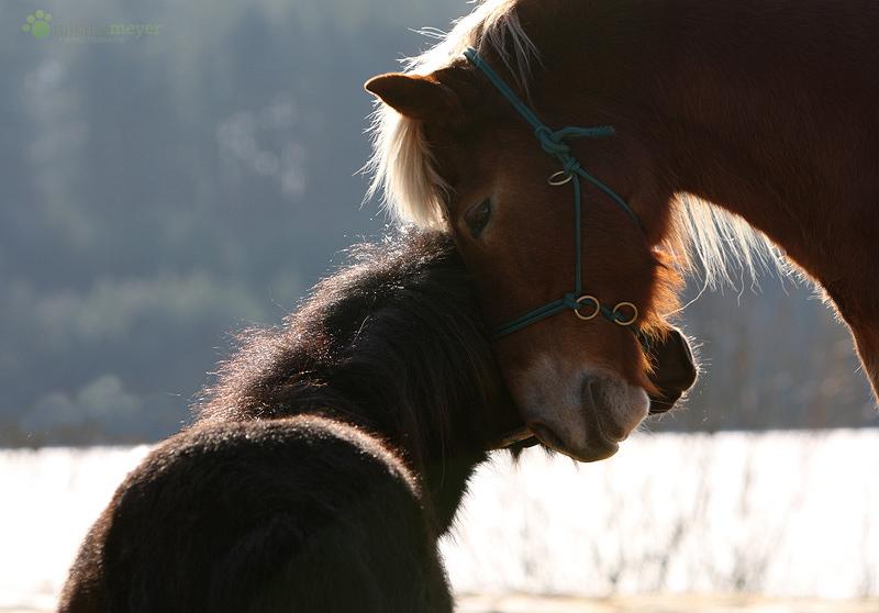 kuscheln foto bild tiere haustiere pferde esel maultiere bilder auf fotocommunity. Black Bedroom Furniture Sets. Home Design Ideas