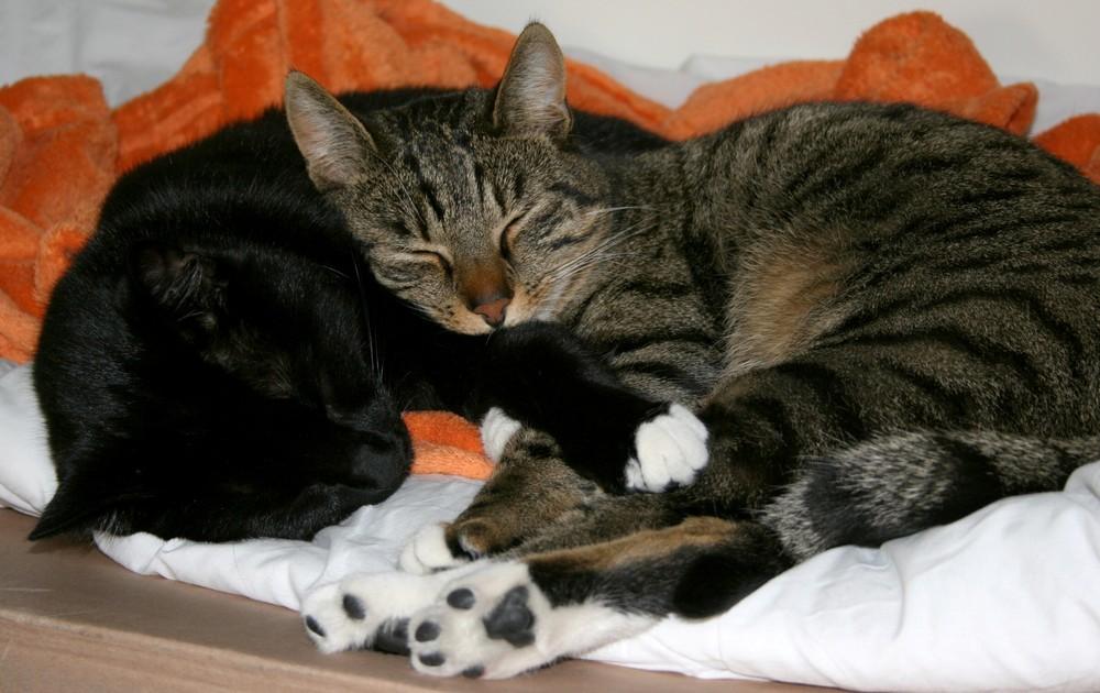 kuscheln ist angesagt foto bild tiere haustiere katzen bilder auf fotocommunity. Black Bedroom Furniture Sets. Home Design Ideas