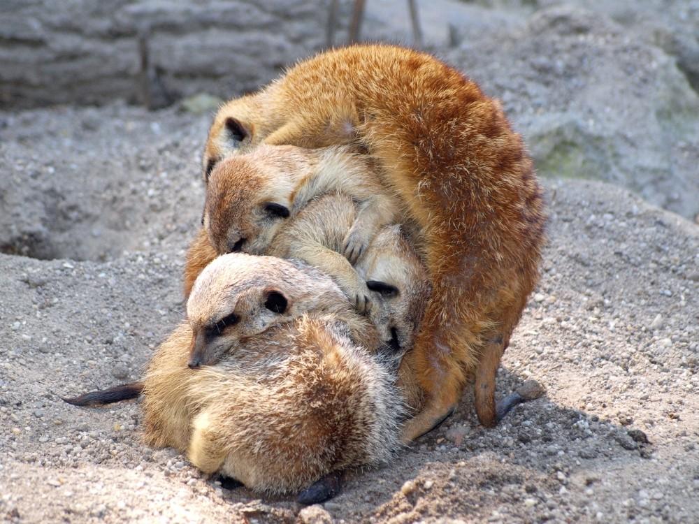 Kuschelnde Tiere