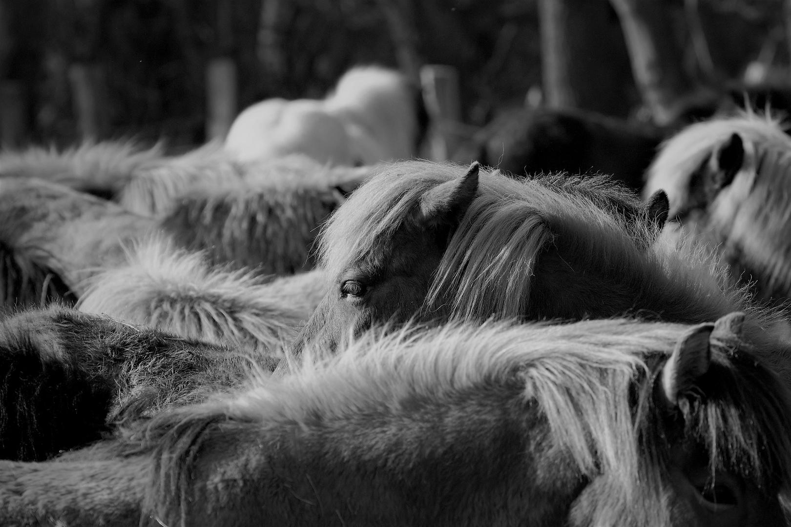 Kuschelpferde