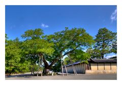 Kyoto Imperial Palace-7