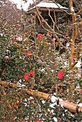 Kyoto: Pflaumenblüte (MW 1997/2 - jwa)