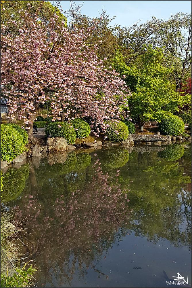 Kyoto VIII