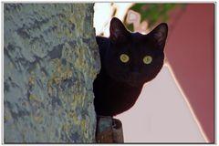 l amie du chat solitaire.....