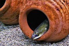 l antre de l anguille aux yeux bleus...