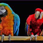 l ara bleu et l ara rouge ....