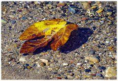 l automne est bien  arrivé.......