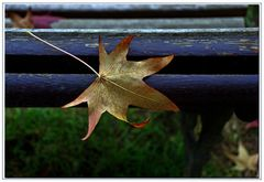 l automne est bien là...