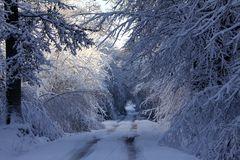 """"""" L' hiver en forêt """""""