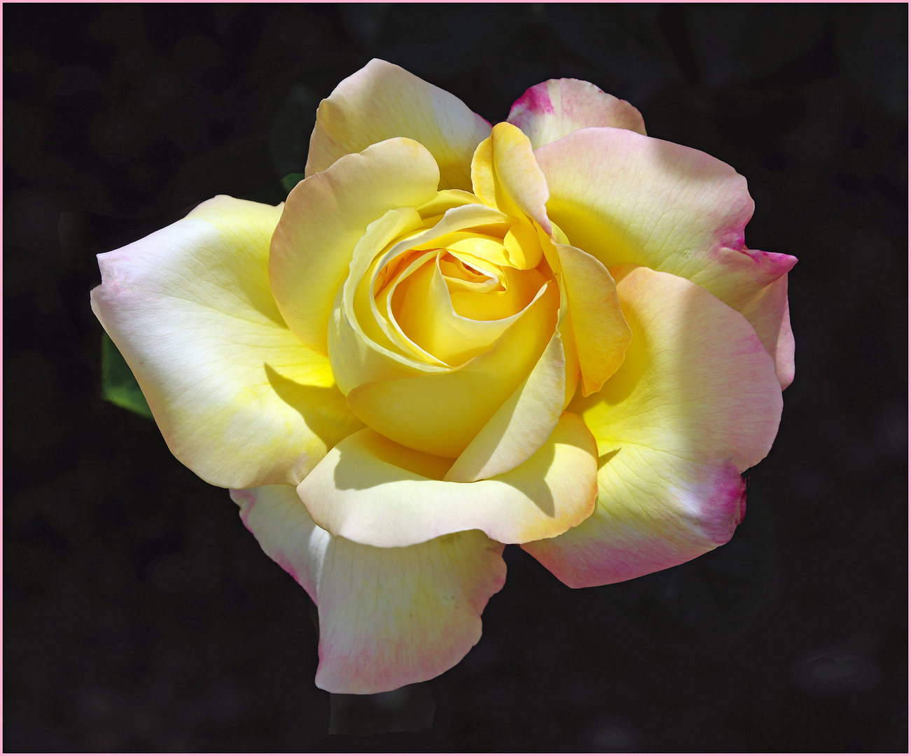 l important , c est la rose ...chantait becaud