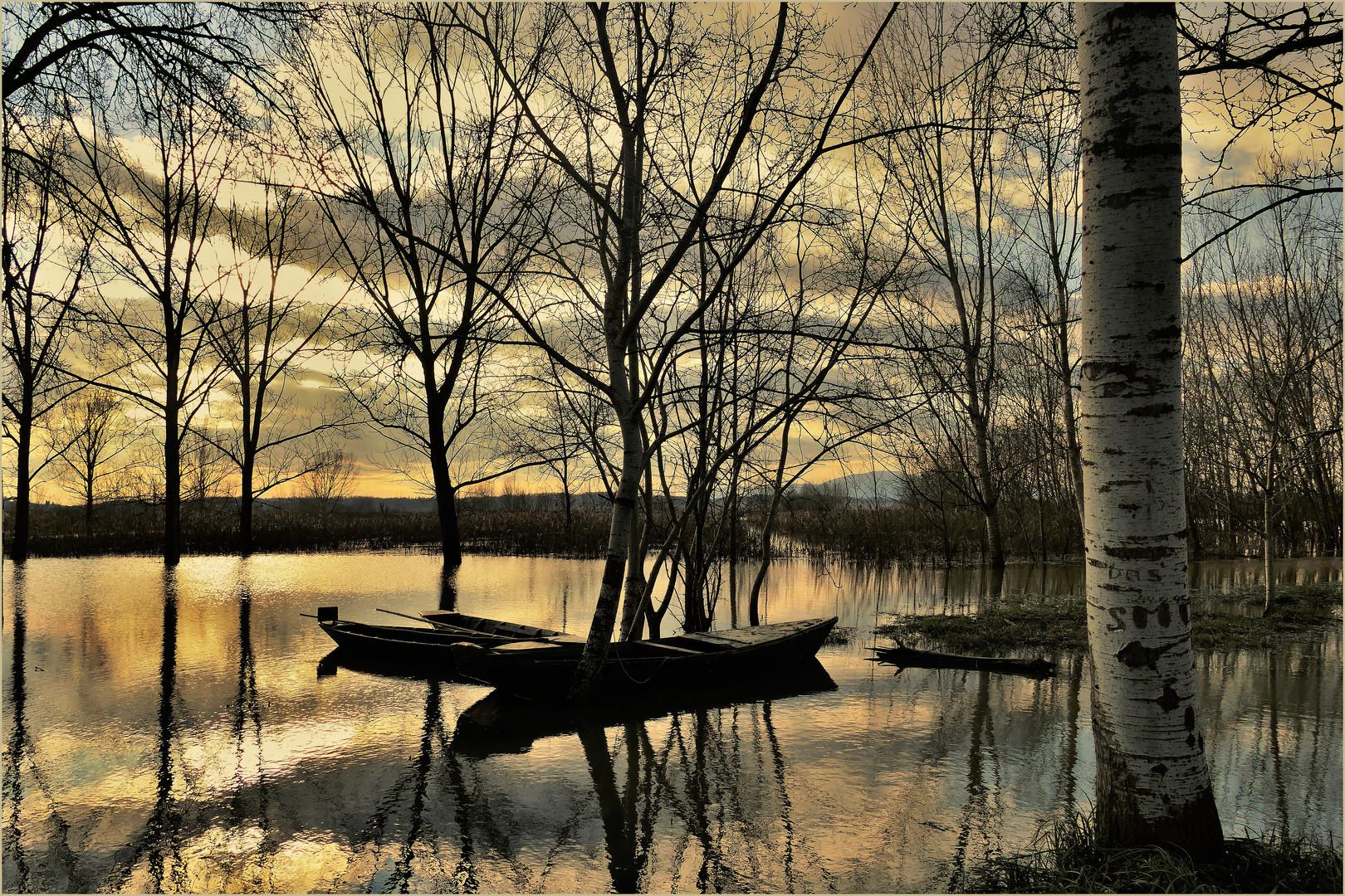 l or du soir au marais  inondé....