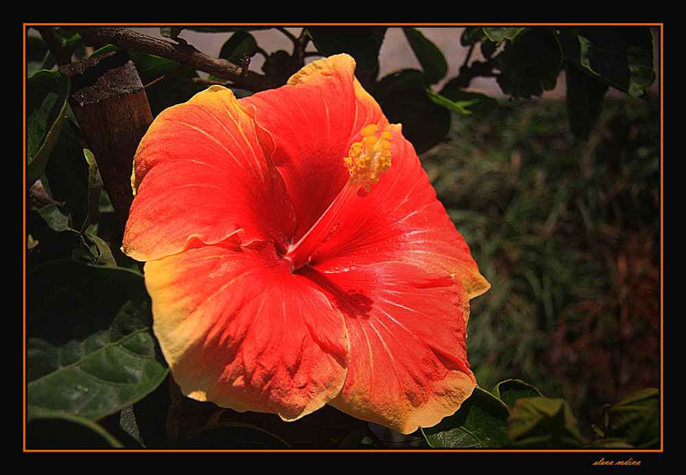 La alegria de la flor