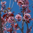 La alegría de la primavera