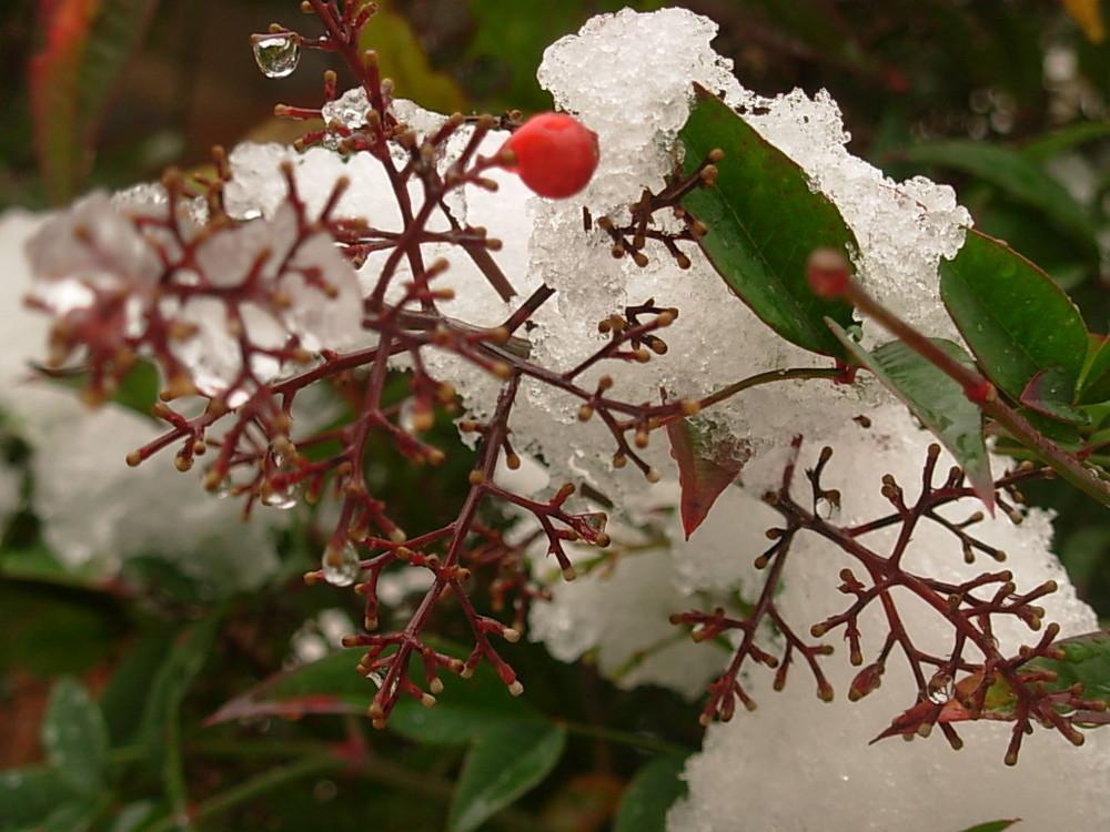 La bacca e la neve di Cinzia Gasparotto
