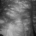 La Bambina fantasma e il Bosco
