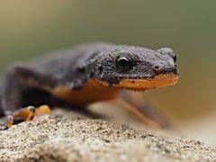 La beauté des amphibiens 1