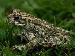 La beauté des amphibiens 3