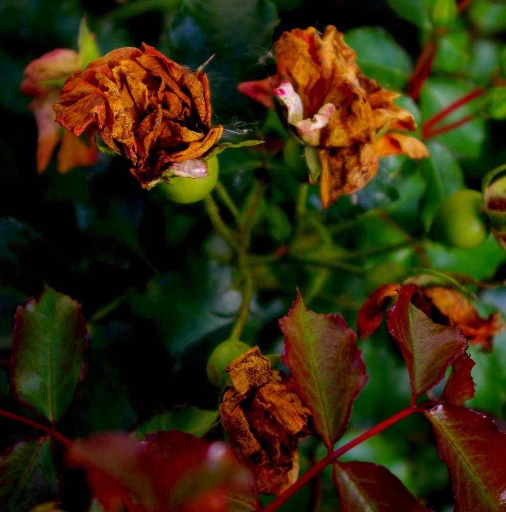 La beauté des fleurs fanées