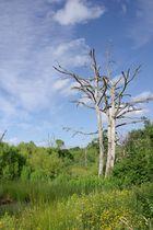 La beauté d'un arbre mort