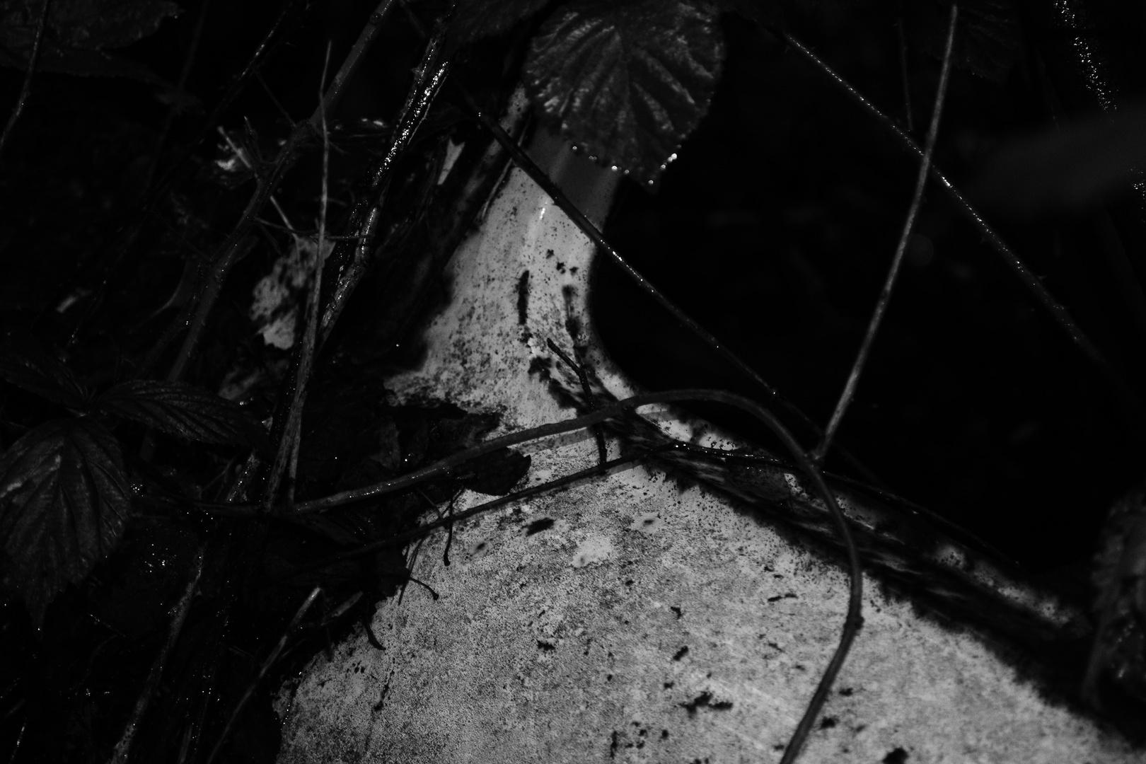 La belle abandonnée