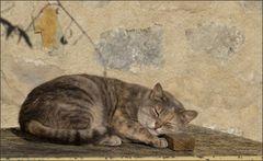 *la Belle au bois  dormant * !!!