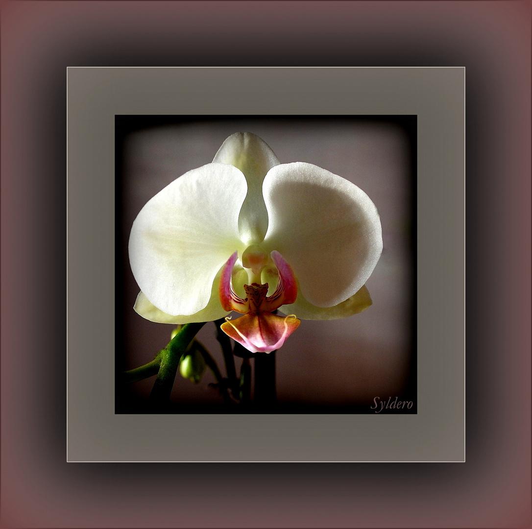 la belle orchid e photo et image fleurs orchid es galerie images fotocommunity. Black Bedroom Furniture Sets. Home Design Ideas