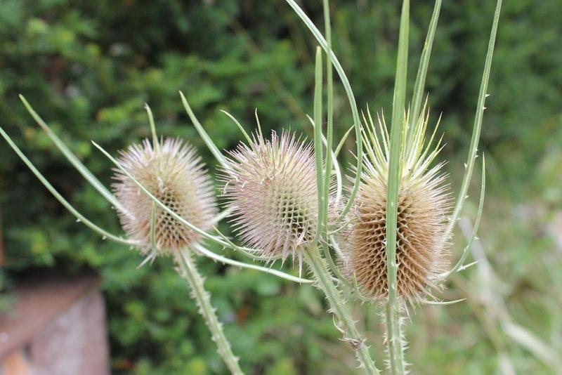 la belleza en una simple flor