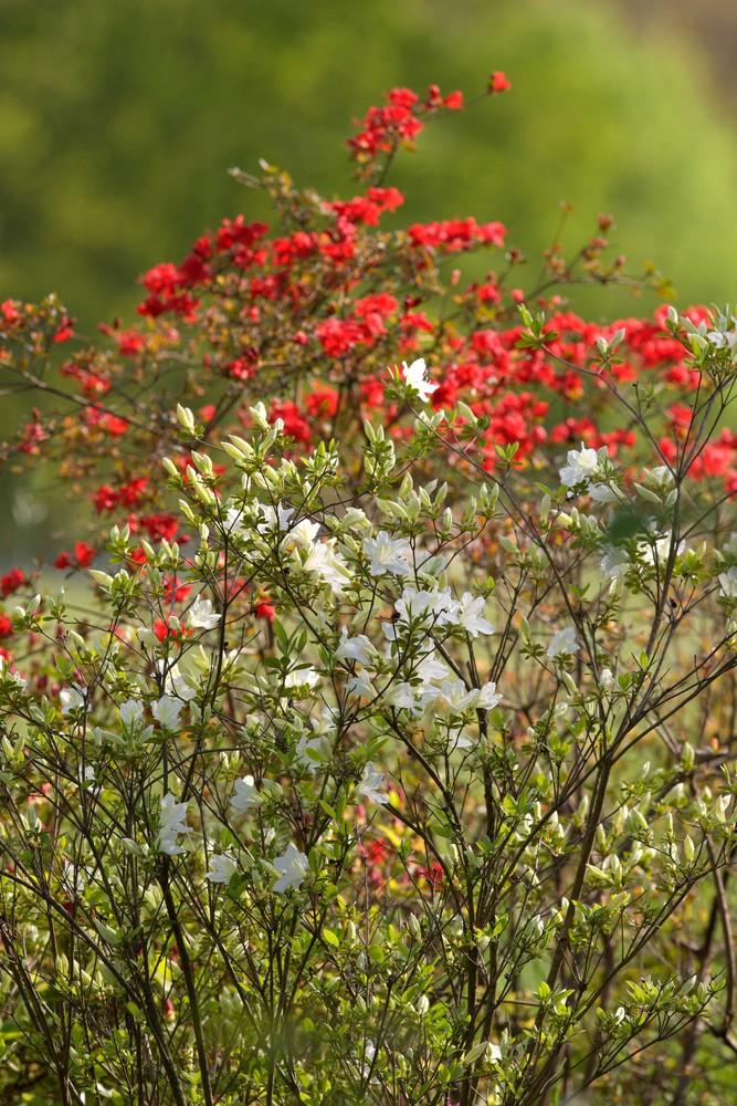 ... la bellezza della primavera ...