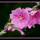 La branche fleurie