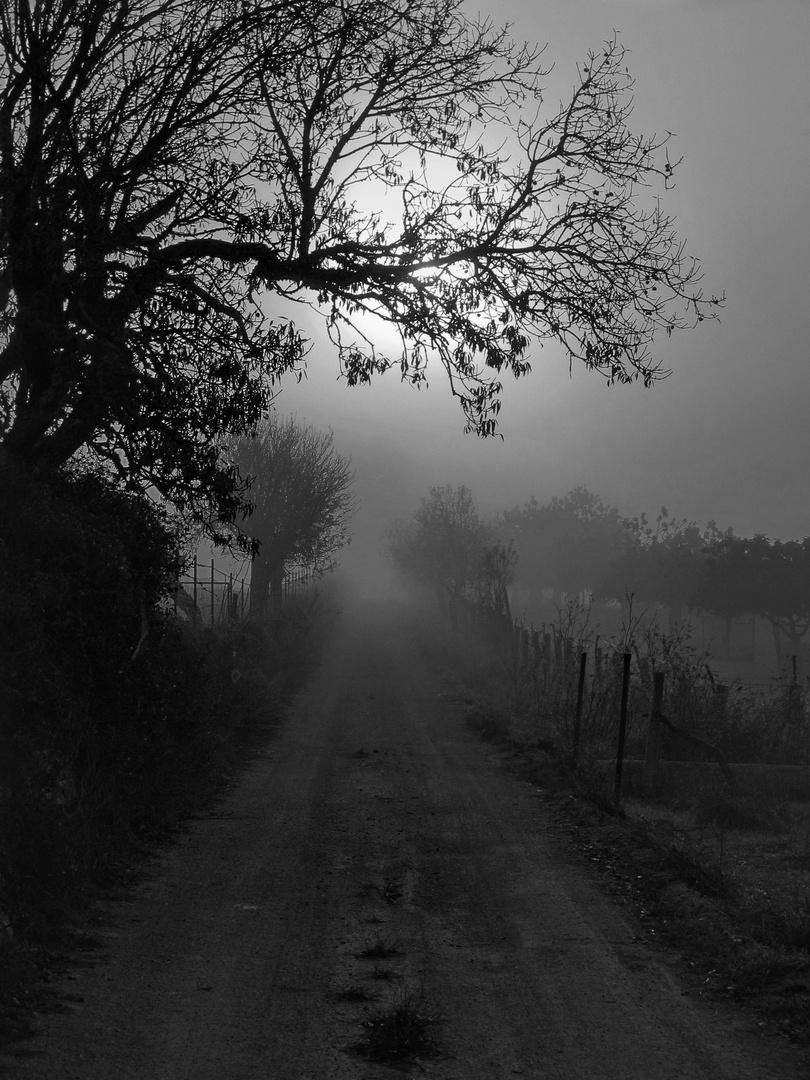 La brevedad del silencio...