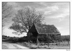 La cabane abandonnée