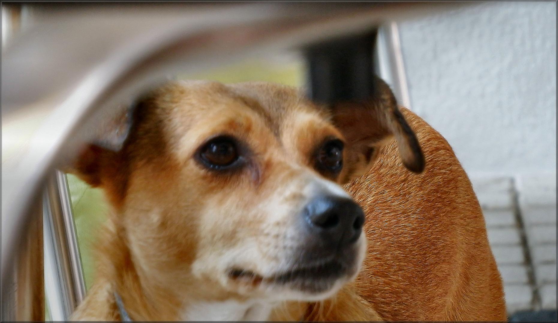 La cagnolina che aveva paura della fotocamera