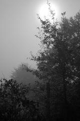 la campagne limousins sous la brume