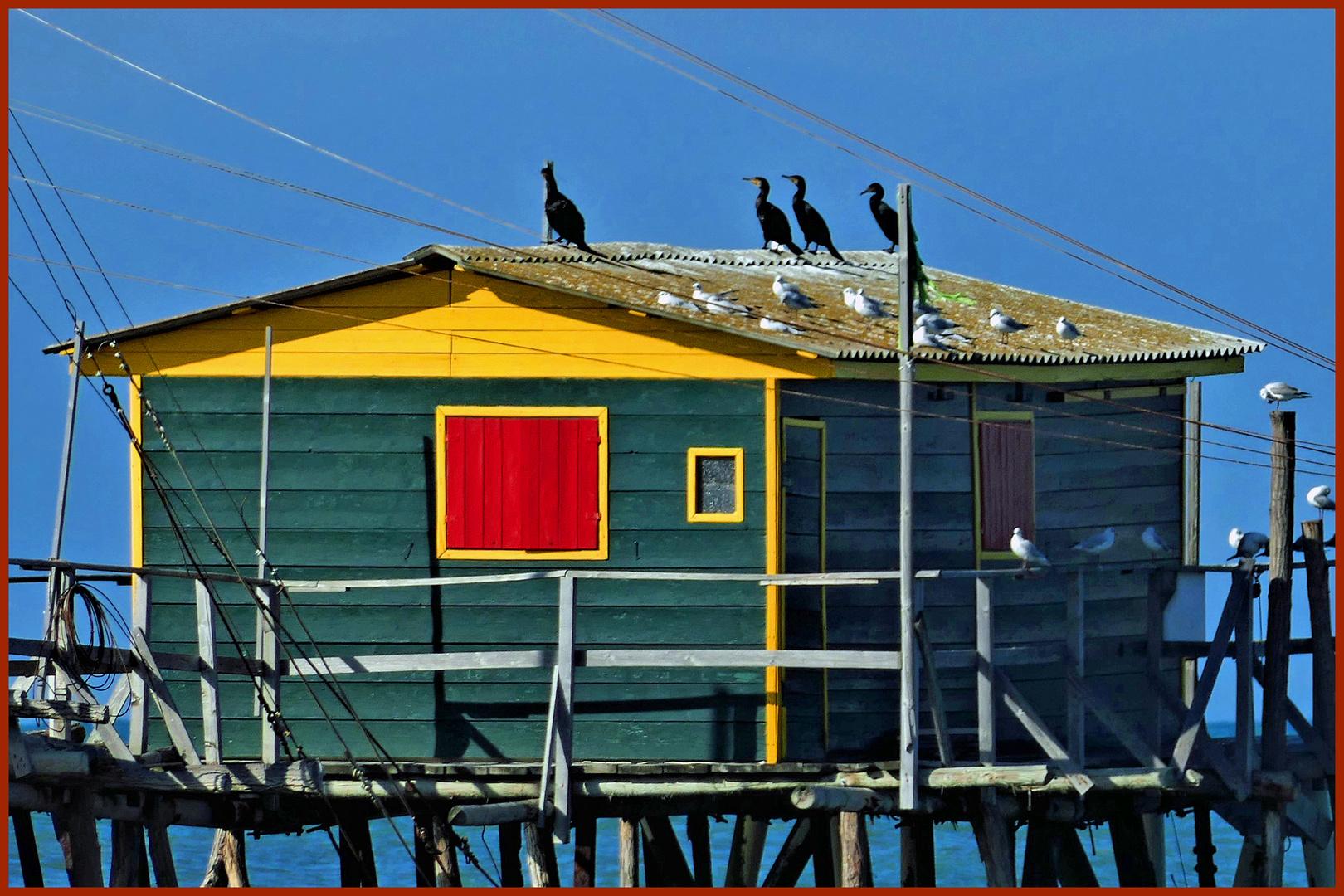 la capanna..... dei cormorani ....