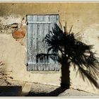 La caresse du palmier