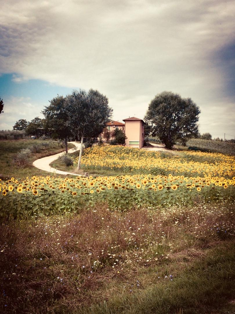 La Casa Tra I Girasoli Foto Immagini Paesaggi Campagna Fotos