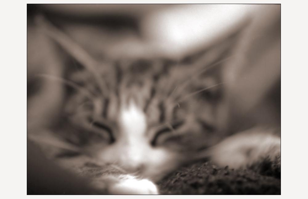.la chatte floue