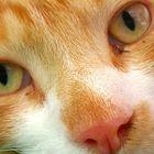 la curiosità di occhi innocenti..