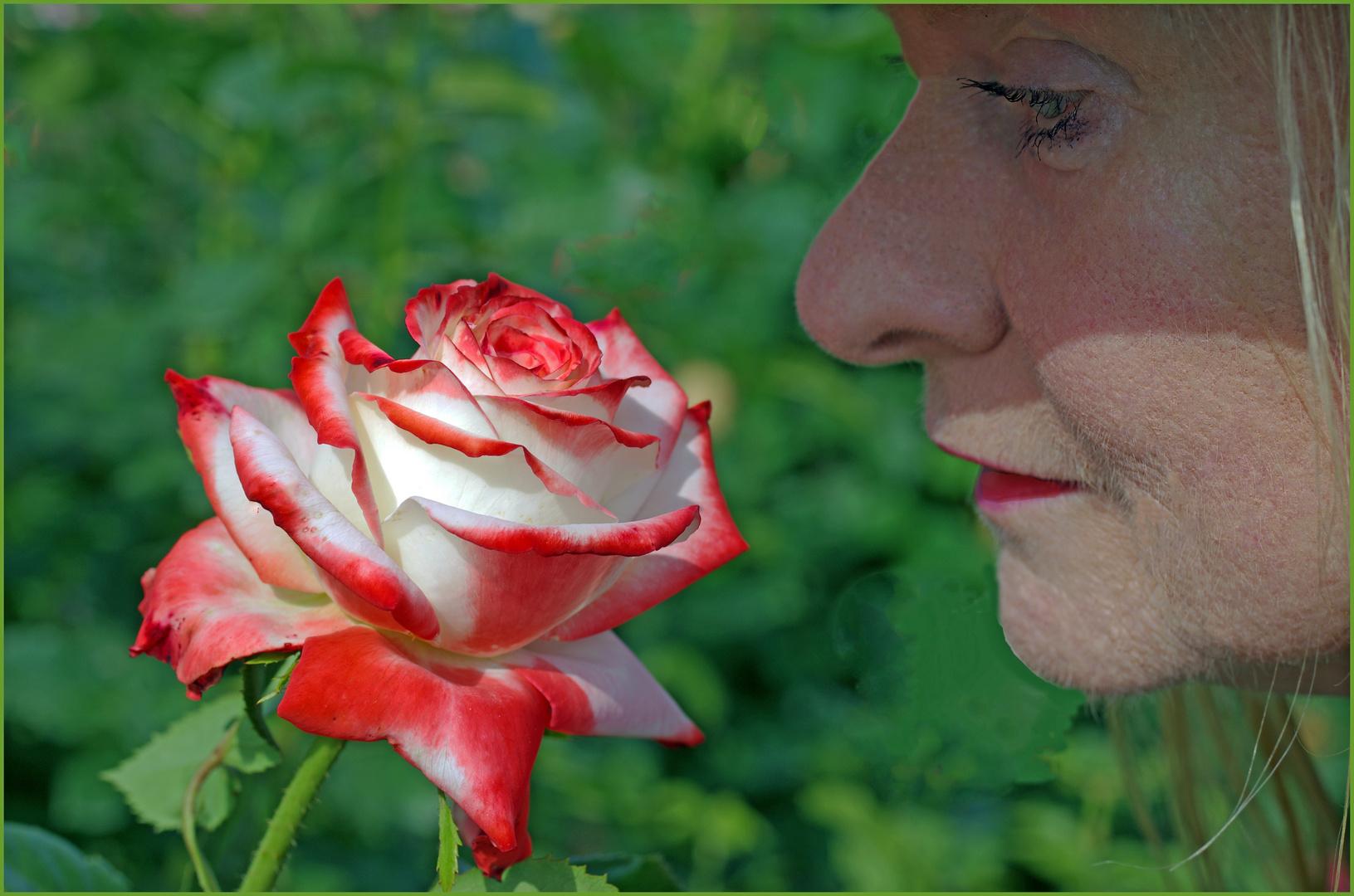la dame à la rose ...