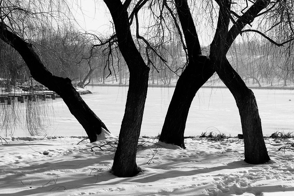 La dance des arbres